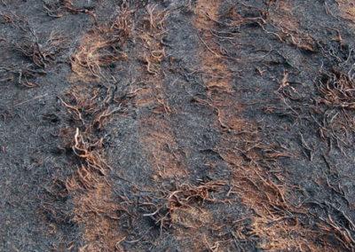 Archaeology-fire-fighting-ehicles-photographer-gavin-edwards